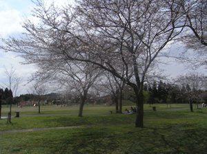 Kumaso_park