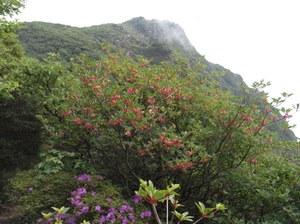 Mt_taisen