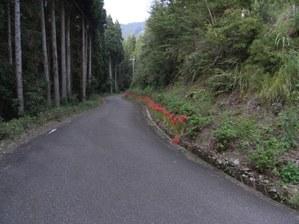 Hydrange_road