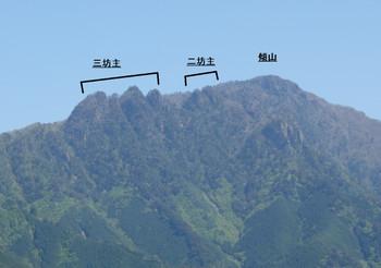 Mitubouzu
