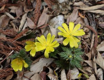 81_flower