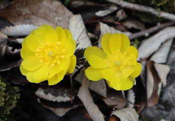 82_flower