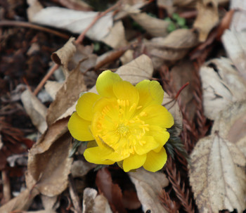 84_flower