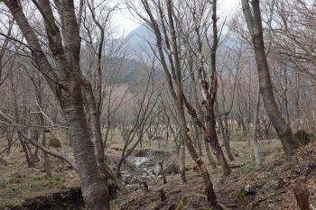 2cherry-basin