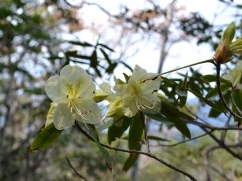 5flower