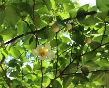 61-flower