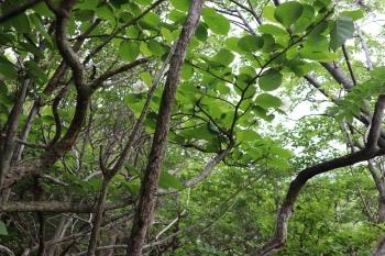 6trees